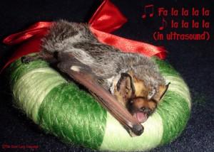 Jorge the hoary bat