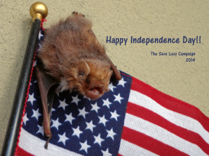 A photograph of a juvenile red bat with an American flag.