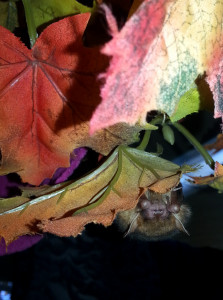 A photo of Gladys the bat hiding in leaves