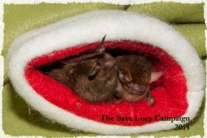 bats-in-a-hat2-300×200