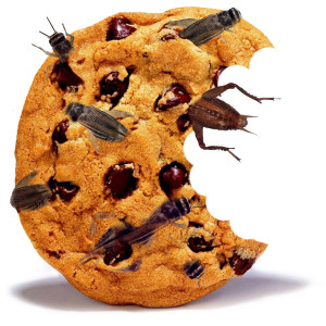 A photo of a cookie made with crickets!