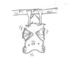 A cute drawing of a shivering bat