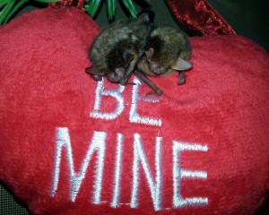 It must be love!!