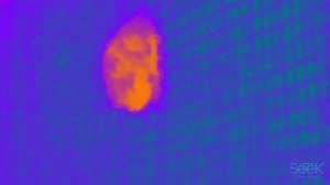 a photo of a red bat taken with a thermal camera