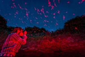 A photograph of a photgrapher setting up to photograph the freetail bats at Bracken Cave in Texas.