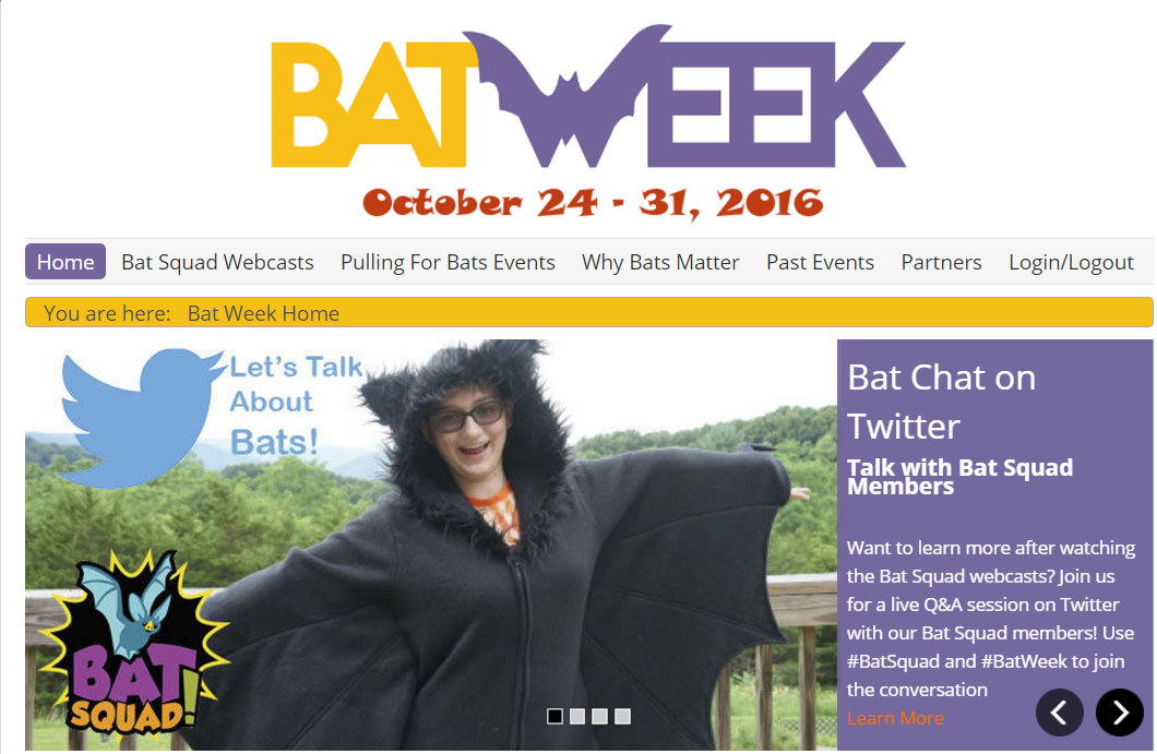 BatWeekBatSquad