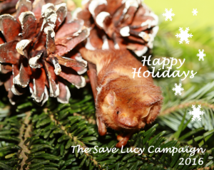 A holiday card featuring a red bat from the Save Lucy Campaign
