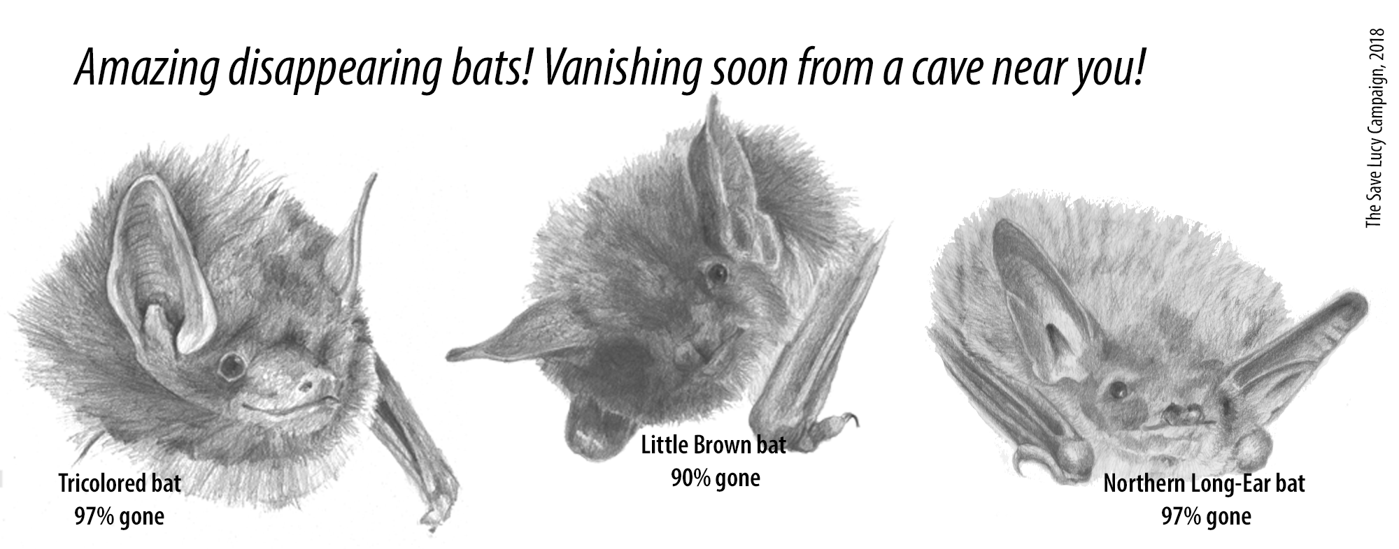 "Pencil drawings of a tricolor bat, a little brown bat, and a northern long-ear bat, with the caption ""Amazing disappearing bats! Vanishing soon from a cave near you!"""