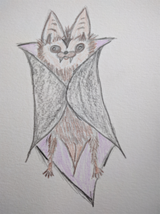 A hand drawing of a bat wearing a Dracula cape. It