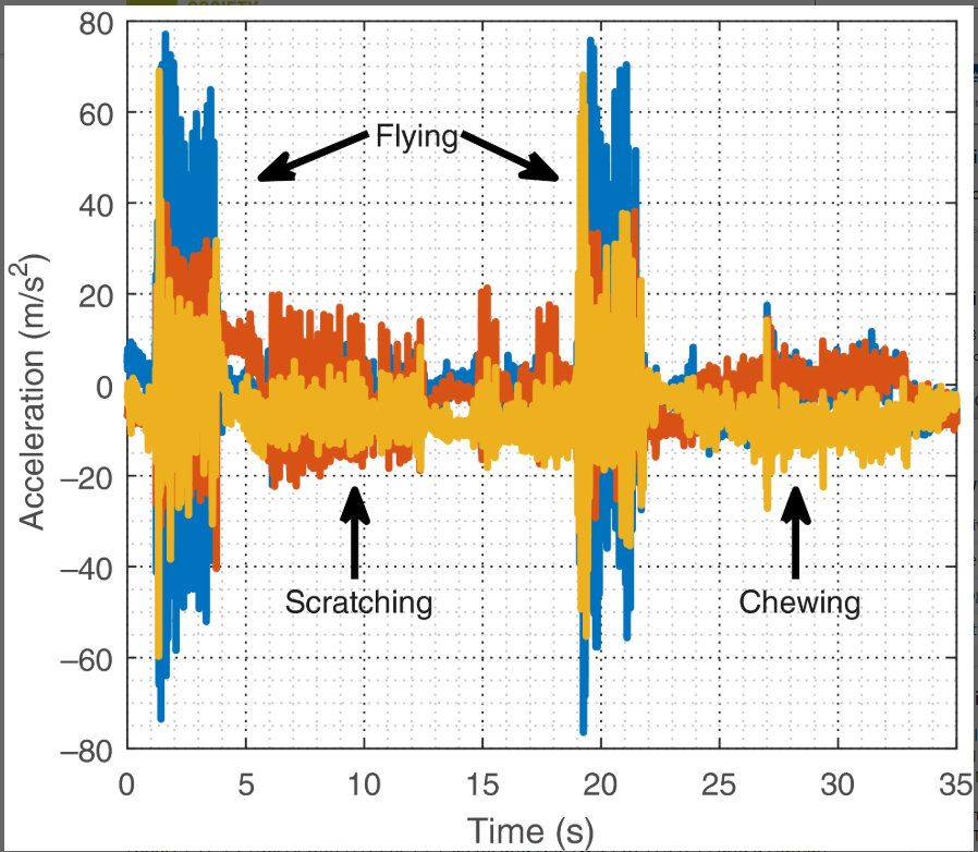 A graph from the research paper discussed in the blog post. I shows acceleration in 3d spave during 3 types of bat activity.