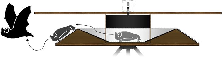 Lindeke-funnel